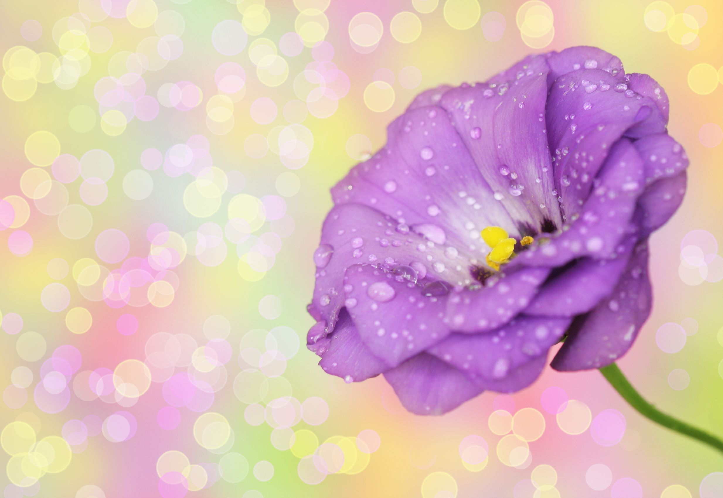 10 Most Beautiful Flowers In The World Flower Meaning