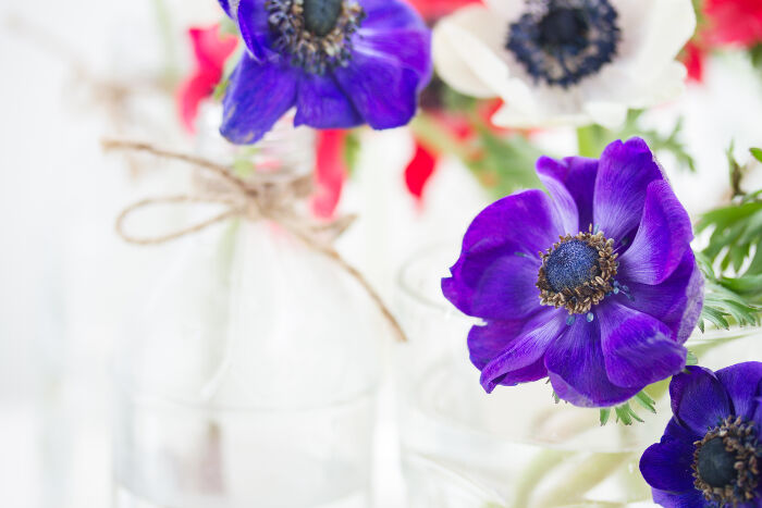 anemone flower meaning  flower meaning, Natural flower