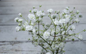 Baby Breath Flowers