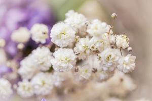 Baby Breath Flowers