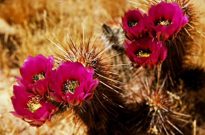 Cactus Flower. Do you want to have more success and joy in your life? The best way to do this is by learning more about your name through numerology.