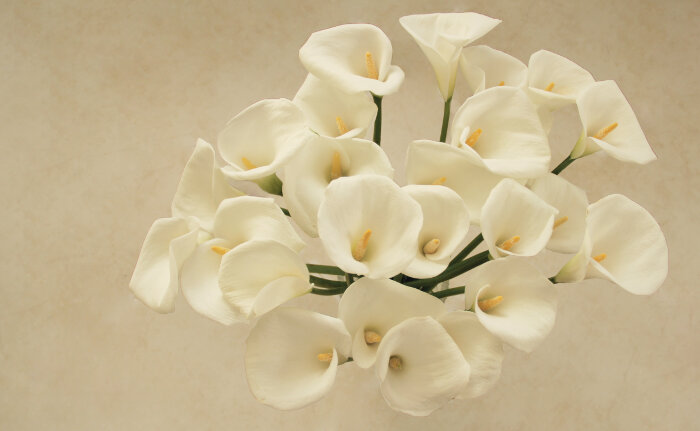 Calla Lily Flower Meaning
