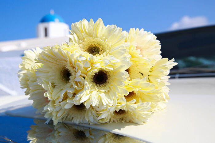 Chrysanthemum Flower Meaning Flower Meaning