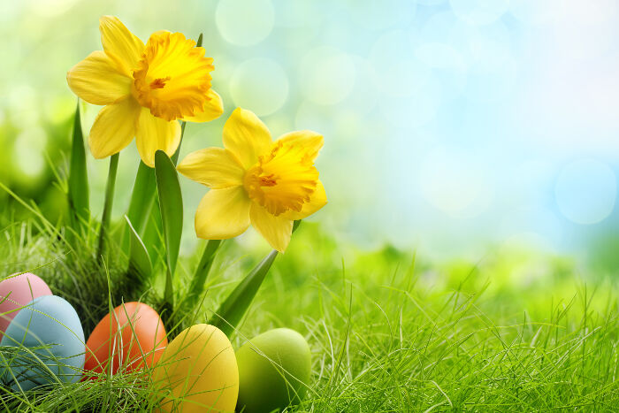 Daffodil Flower Meaning Flower Meaning