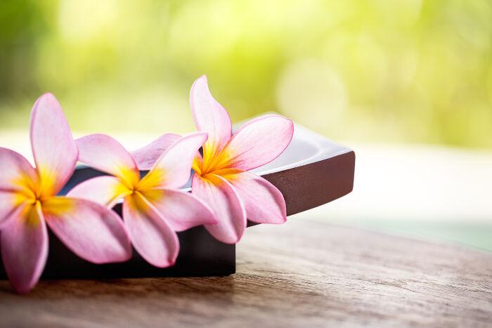 frangipani flower meaning  flower meaning, Natural flower