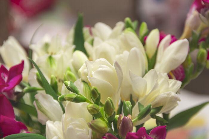 Freesia flower meaning flower meaning freesia flowers mightylinksfo