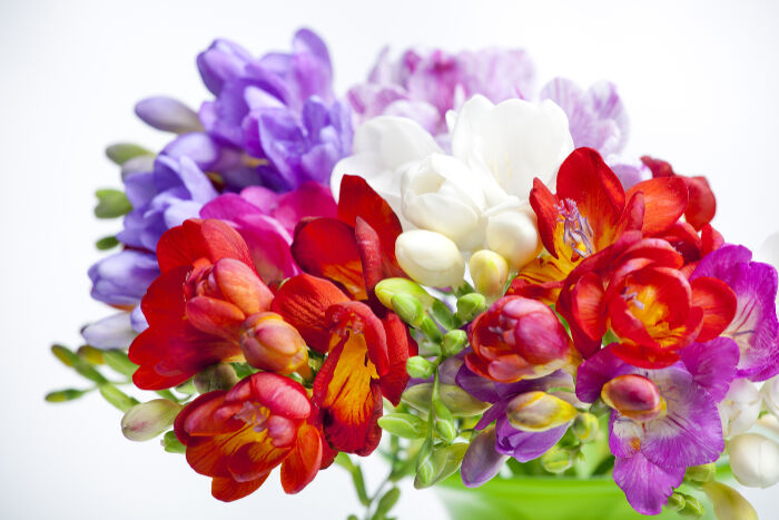Freesia Flower Meaning - Flower Meaning