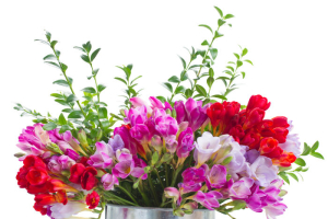 Freesia flower meaning flower meaning freesia flowers mightylinksfo