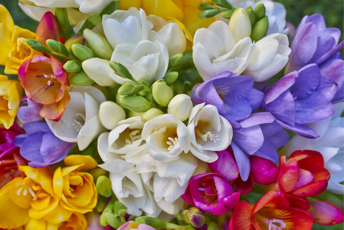 Freesia Flower Meaning Flower Meaning