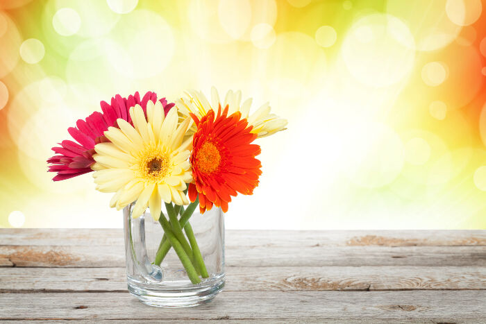 Gerbera Flower Meaning