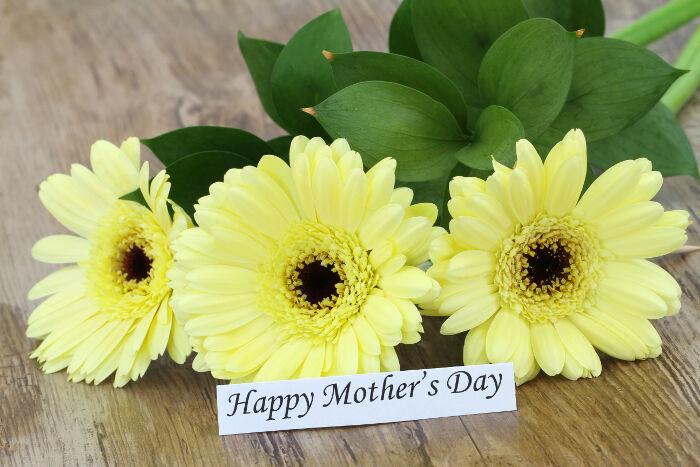 Gerbera flower meaning flower meaning gerbera flowers mightylinksfo