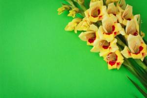 Gladiolus-2