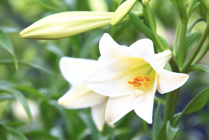 May Birth Flower Flower Meaning