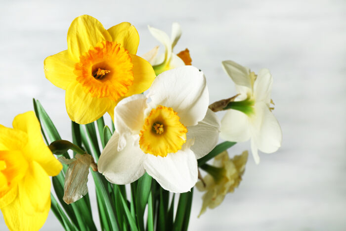 Narcissus Flower Meaning - Flower Meaning