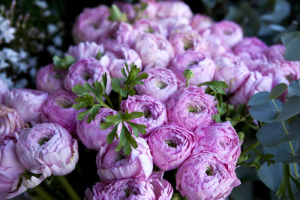 Bunch of pink peonies in a garden** Note: Shallow depth of field