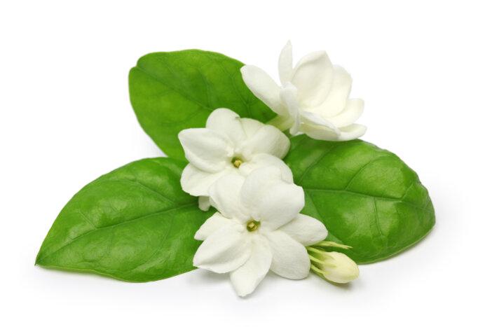 Sampaguita Flowers