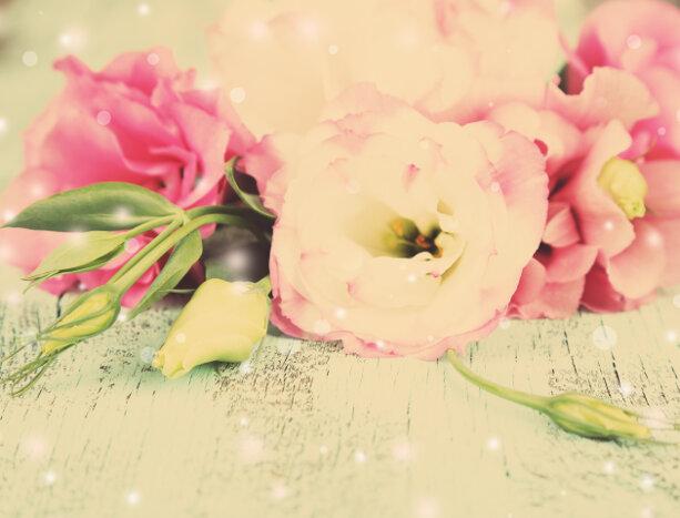 eustoma flower meaning  flower meaning, Natural flower