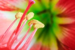 May Birth Flowers
