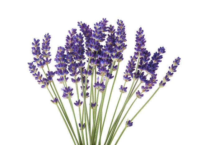 purple flowers meaning  flower meaning, Natural flower