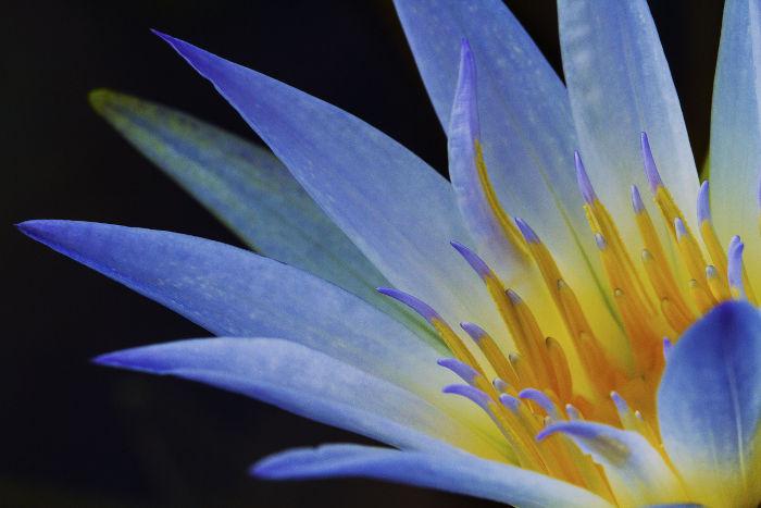 Purple flowers meaning flower meaning lotus mightylinksfo