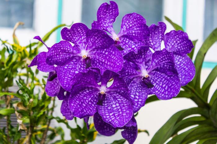 purpple flowers