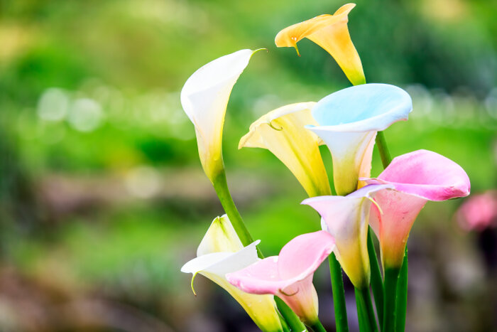 When One Hears Of A The Thought Sending Flowers To Be Displayed During Wake And Funeral Service Most Likely Will Come Up